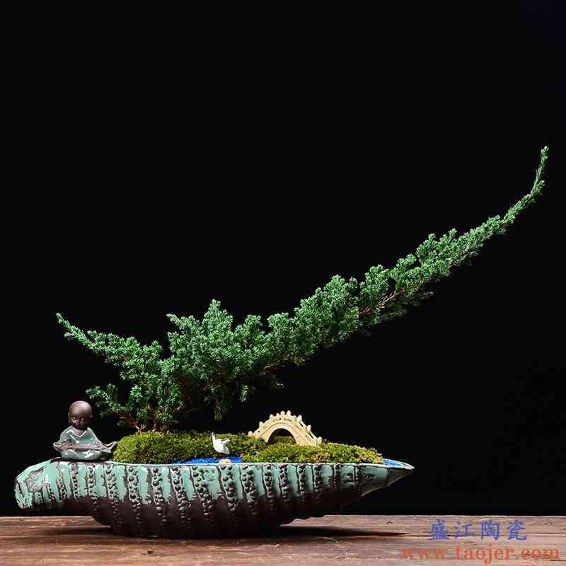 大口径多肉拼盘花盆陶瓷创意桌面菖蒲绿植室内文竹盆栽造景盆景盆