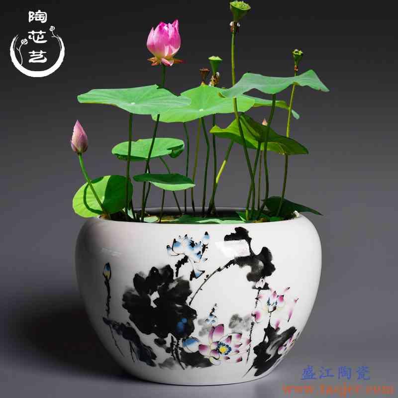 大号无孔简约白色碗莲绿萝水培花盆创意发财树铜钱草多肉陶瓷花盆