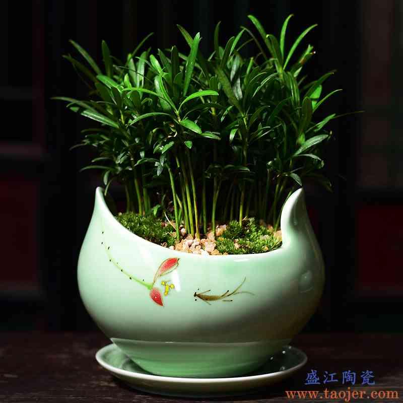 家用办公室简约蝴蝶兰专用绿萝文竹多肉盆创意陶瓷花盆大号带托盘