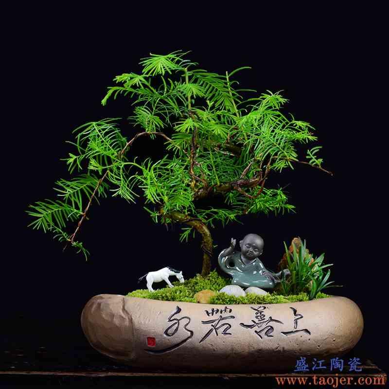 铜钱草一叶莲水仙花粗陶花盆陶瓷简约文竹盆景盆家用大号多肉拼盘