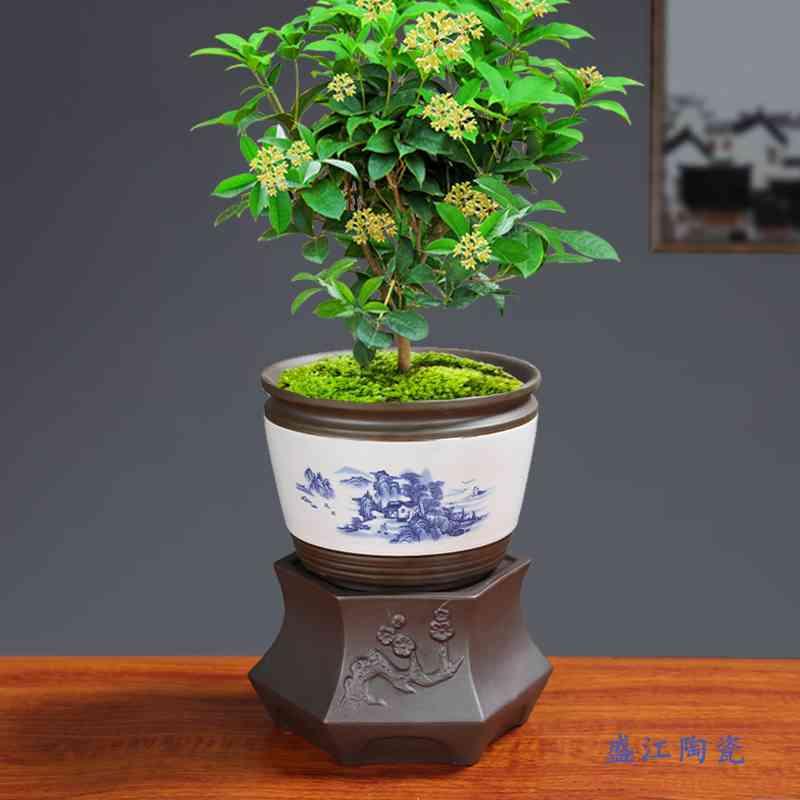 陶瓷懒人花盆自动吸水景德镇青花瓷复古组合景观盆栽创意新品手彩