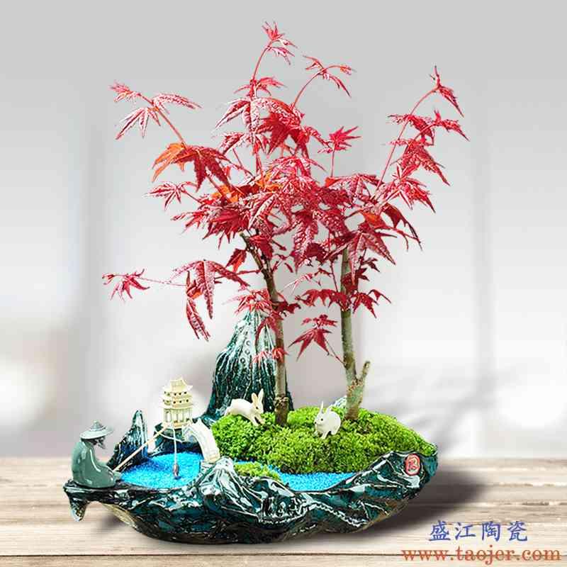 陶瓷绿植物组合新款特惠花盆盆景创意迎客松红枫文竹榕树大号专用