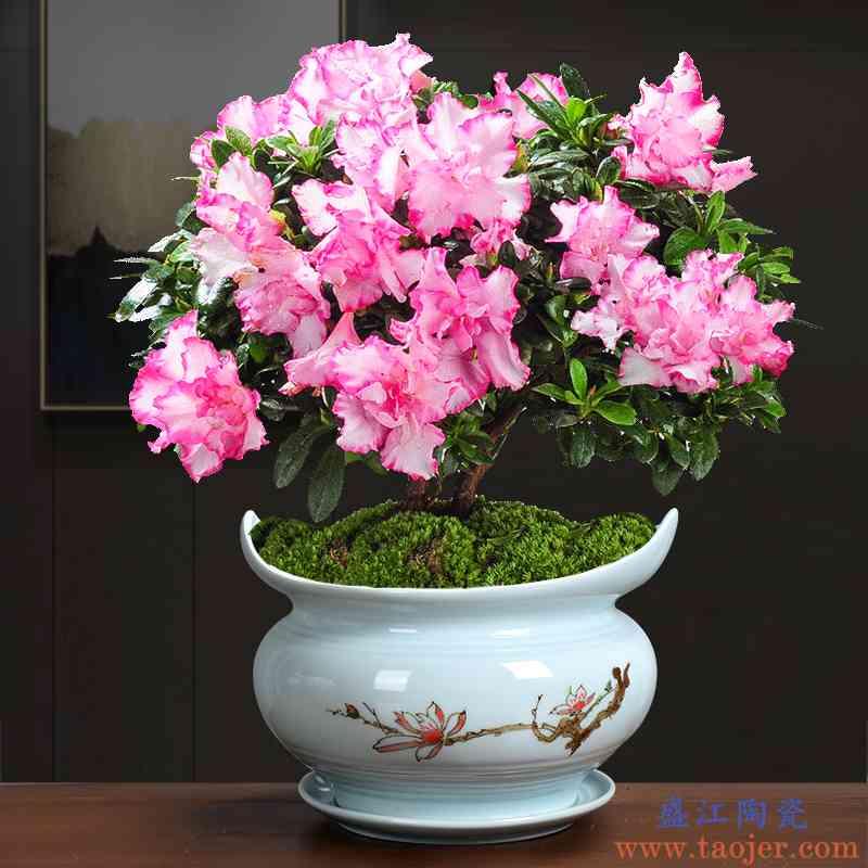 大号陶瓷青瓷桌面花盆办公个性绿植物多肉特惠简约创意兰花带托盘