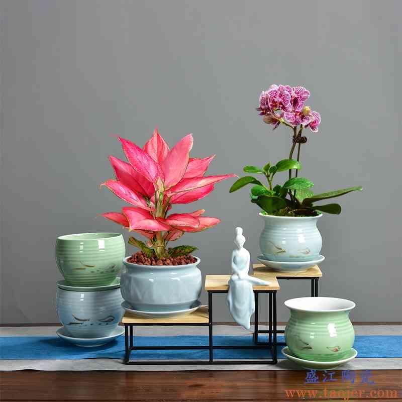 桌面陶瓷花盆蝴蝶兰茉莉如意皇后多肉专用仕女DIY组合带托盘木座