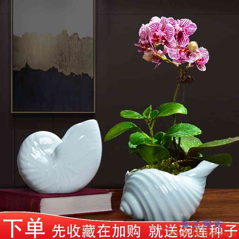 陶瓷绿植水土培专用花盆创意吉利红蝴蝶兰海螺大号小北欧盆栽个性