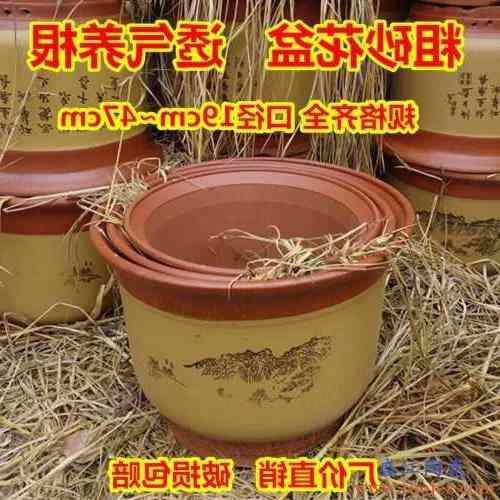 精品兰花盆君子兰带托盘兰草盆景陶瓷盆栽室内客厅兰花专用盆